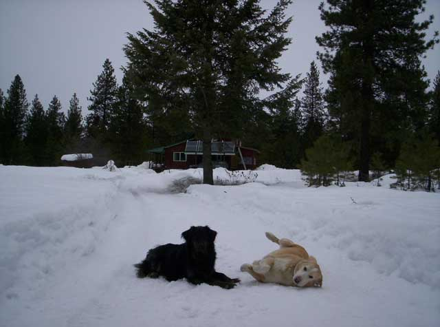 Boydogs on a snowy road, March 2009